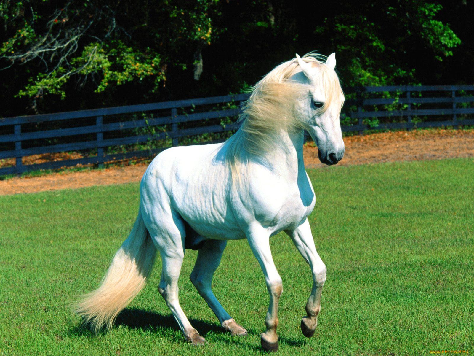 картинки с домашними животными лошадьми для